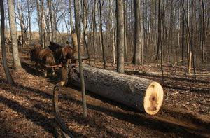 Horse Pulling Log